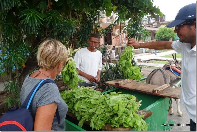 Au coin d'une rue nous tombons sur un vendeur de salade