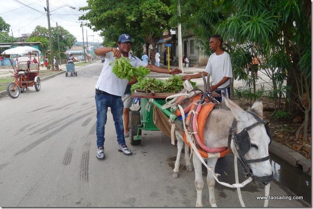 Qui vient à la ville avec son âne
