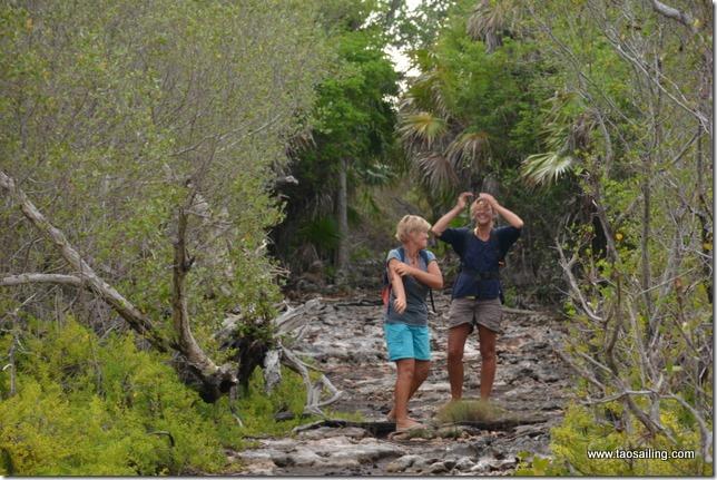 Cayo cantiles...sentier dans la mangrove, les moustiques attaquent!