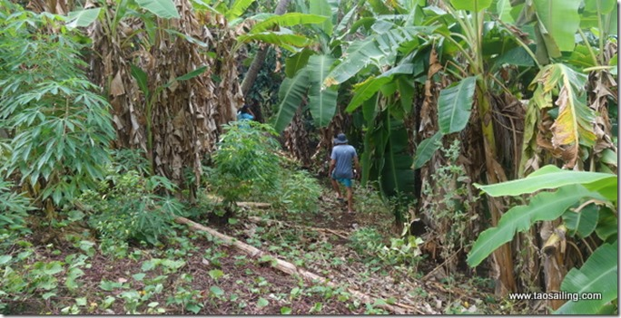 Anaho, à la recherche de bananes avec Laura