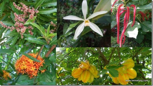 Ua Huka- Arboretum